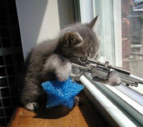 Catshooter Jpg